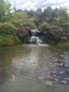 Koi Pond at the Oregon Garden